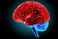 brain-07-feb-2017
